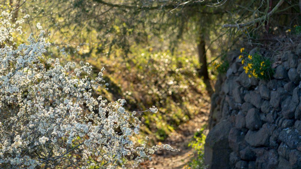 Wanderweg in Martinstein