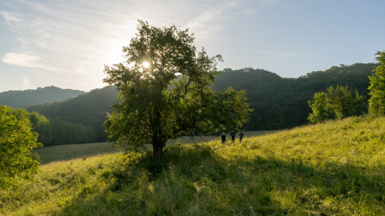 Obstbaum im Morgenlicht